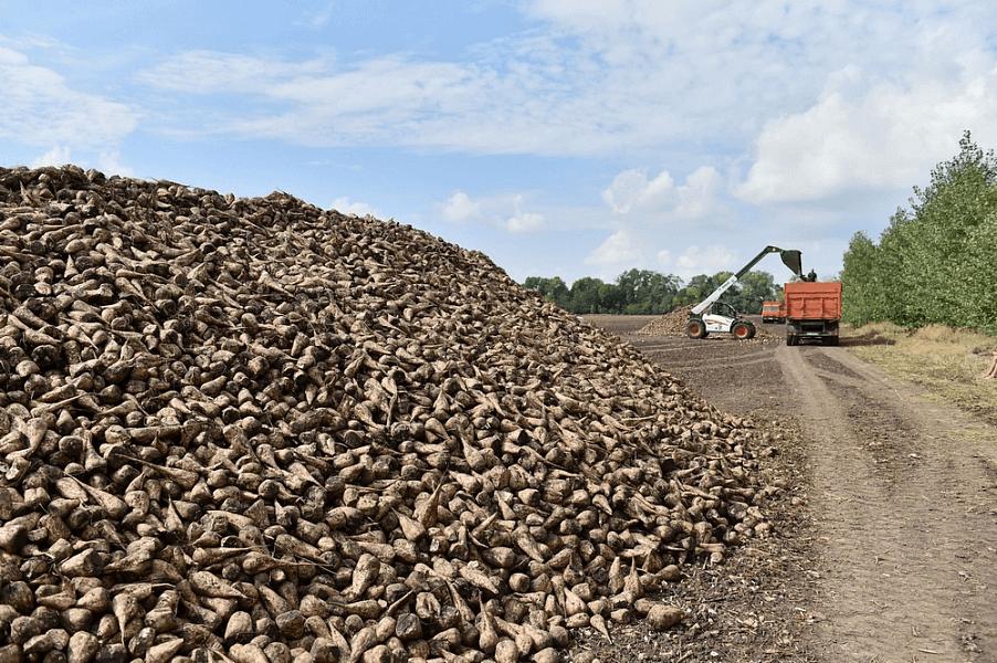 Урожай сахарной свеклы в Краснодарском крае превысил 2,5 млн тонн