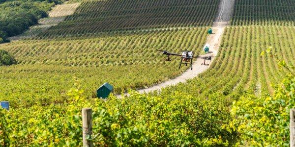 В Абрау-Дюрсо прошли испытания дрона для борьбы с вредителями винограда