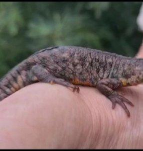 В Геленджике пенсионерка во дворе дома обнаружила экзотическое животное