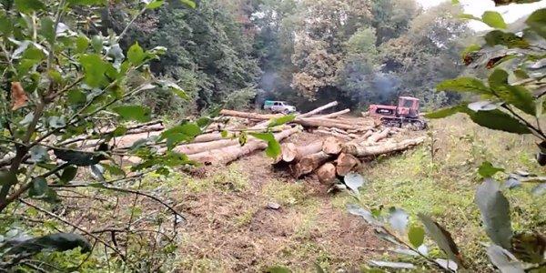 В Апшеронском районе на горе Шихан незаконно вырубили деревья