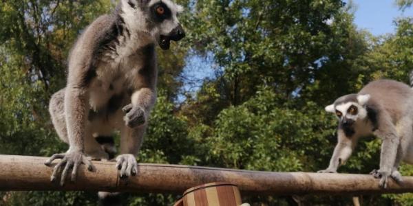 Из Новороссийска в Китай хотели контрабандой доставить приматов на 5 млн рублей