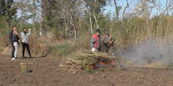 В Гулькевичском районе правоохранители уничтожили 900 кустов конопли
