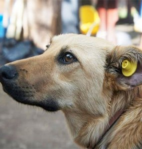 В Туапсинском районе начали массово отлавливать бездомных собак для стерилизации
